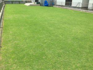 2016年7月10日の裏庭の芝生。南東から。13:30。
