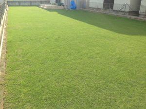 2016年7月10日の裏庭の芝生。南東から。17:00。