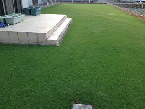 2016年7月12日の芝生。西側から。