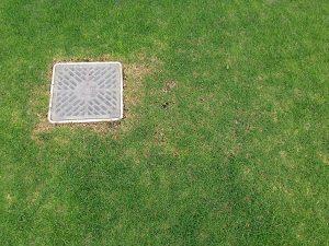排水桝のそばの芝生の調子の悪い箇所。