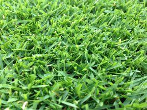 2016年7月20日。芝刈りの翌朝の裏庭の芝生。近接撮影。