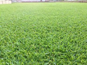 2016年7月20日。芝刈りの翌朝の裏庭の芝生。低い目線での撮影。