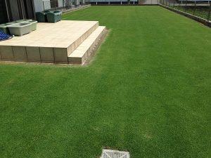 エッジへの目土補充後の芝生。西側から。