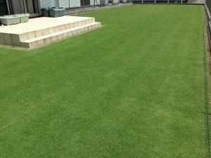 エッジへの目土補充後の芝生。南西から。