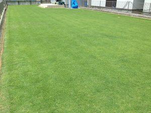 エッジへの目土補充後の芝生。南東から。
