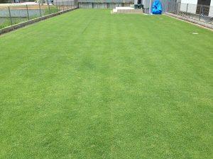 エッジへの目土補充後の芝生。東側から。