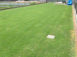 エッジへの目土補充後の芝生。北東から。