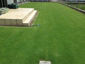 スプリンクラーの設置後の裏庭の芝生。西側から。