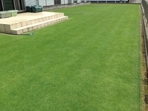 スプリンクラーの設置後の裏庭の芝生。南西から。