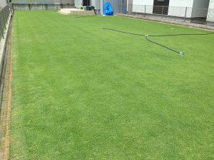 スプリンクラーの設置後の裏庭の芝生。南東から。