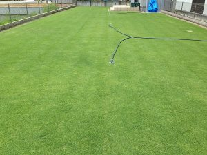 スプリンクラーの設置後の裏庭の芝生。東側から。
