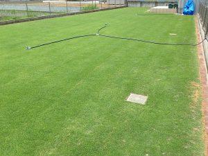 スプリンクラーの設置後の裏庭の芝生。北東から。