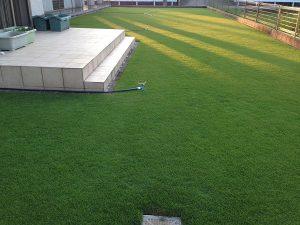 2016年7月29日の朝の裏庭の芝生。西側から。