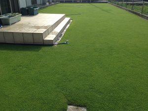茶メネ+緑メネの後の裏庭の芝生。西側から。