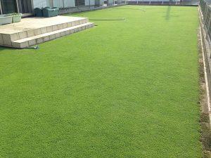 茶メネ+緑メネの後の裏庭の芝生。南西から。