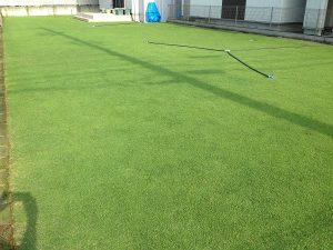 茶メネ+緑メネの後の裏庭の芝生。南東から。