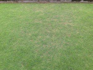 芝生の南側の生育の悪い箇所。