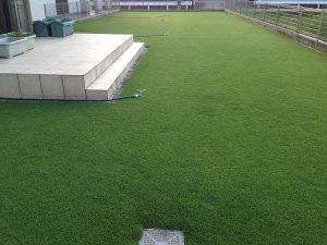 2016年8月4日の朝の裏庭の芝生。
