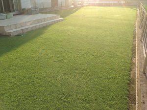 2016年8月5日の朝の裏庭の芝生。南西から。
