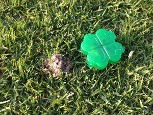芝生のアリの巣の横にアリの巣コロリ。