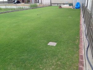 夕方の芝刈りの途中。芝刈り後の芝生に縦のストライプ。