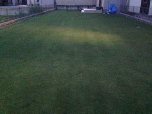 既に薄暗い芝刈り後の芝生。東側から。