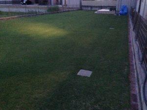 既に薄暗い芝刈り後の芝生。北東から。