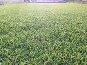 2016年8月9日の朝の裏庭の芝生。すごく低めの地面目線。