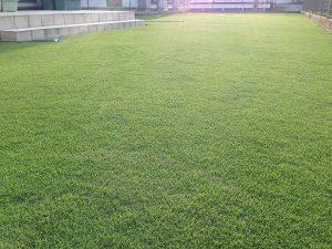 2016年8月9日の朝の裏庭の芝生。少し低めの目線。