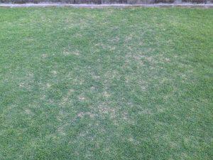 庭の南側の生育の悪い箇所。