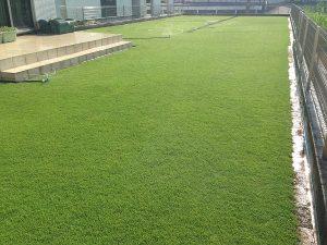 散水中の裏庭の芝生。