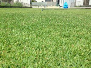 2016年8月13日の午前中の裏庭の芝生。