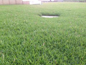 2016年8月16日の朝の裏庭の芝生。かなり低めの目線。