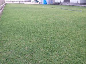 2016年8月16日の朝の裏庭の芝生。少し低めの目線。