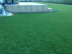 2016年8月17日の朝5:30の裏庭の芝生。少し低めの目線。