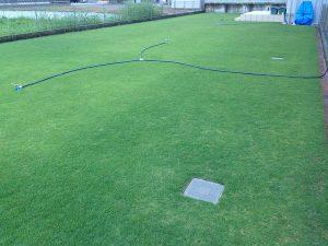 2016年8月17日の朝5:30の裏庭の芝生。