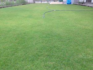 2016年8月18日の朝の裏庭の芝生。少し低めの目線。