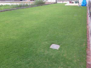 2016年8月21日の裏庭の芝生。芝刈り後。