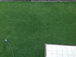 2016年8月22日の朝の裏庭の芝生。2階のバルコニーから。中央付近。
