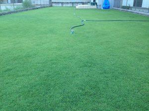 2016年8月22日の朝の裏庭の芝生。少し低めの目線。東側から。