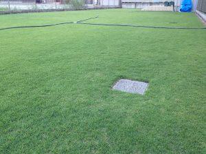 2016年8月22日の朝の裏庭の芝生。少し低めの目線。北東から。