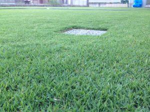 2016年8月22日の朝の裏庭の芝生。かなり低めの目線。北東から。