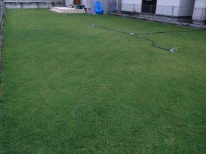 2016年8月23日の朝のまだ薄暗い裏庭の芝生。