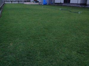 2016年8月23日の朝のまだ薄暗い裏庭の芝生。少し低めの目線。