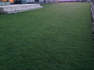 2016年8月24日の早朝のまだ薄暗い裏庭の芝生。少し低めの目線。