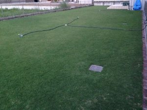 2016年8月24日の早朝のまだ薄暗い裏庭の芝生。