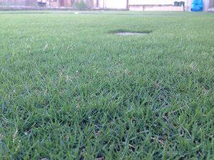 2016年8月25日の朝の裏庭の芝生。かなり低めの目線。