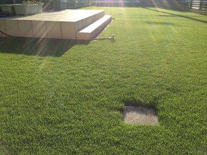 2016年8月25日の朝の日の出の後の裏庭の芝生。少し低めの目線。