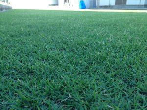 2016年8月25日の朝の日の出の後の裏庭の芝生。かなり低めの目線。