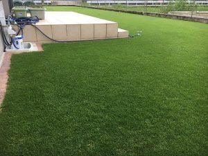 2016年8月26日の朝の裏庭の芝生。少し低めの目線。